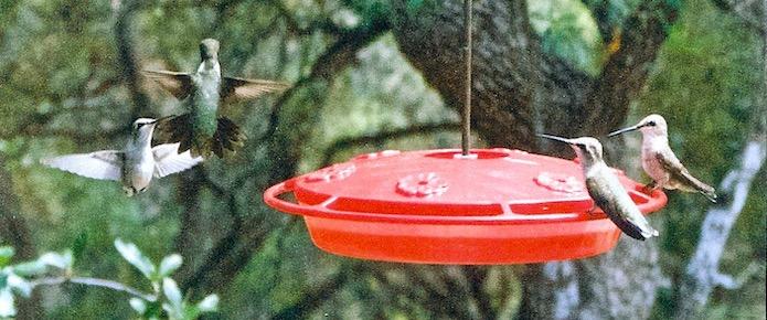 It's A Hummingbird Birthday