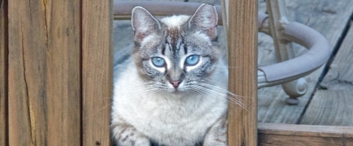Feral Cat Fridays: The White Shadow