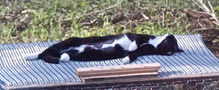 Feral Cat Fridays: Tux and the Birds and the Bees