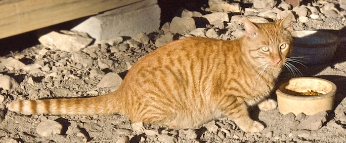 Feral Cat Fridays: A Hiss From Alger