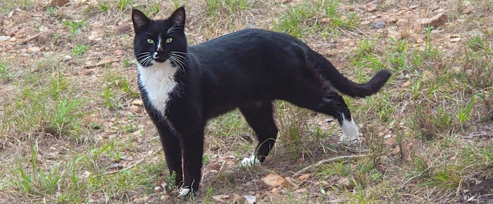 Feral Cat Fridays: Call Me Smudge