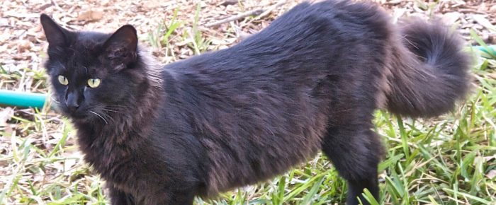 Feral Cat Fridays: Meet Meester Streak